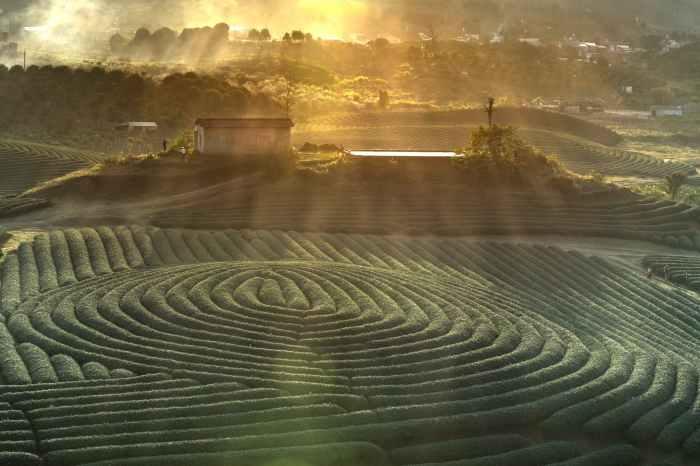 Maze field