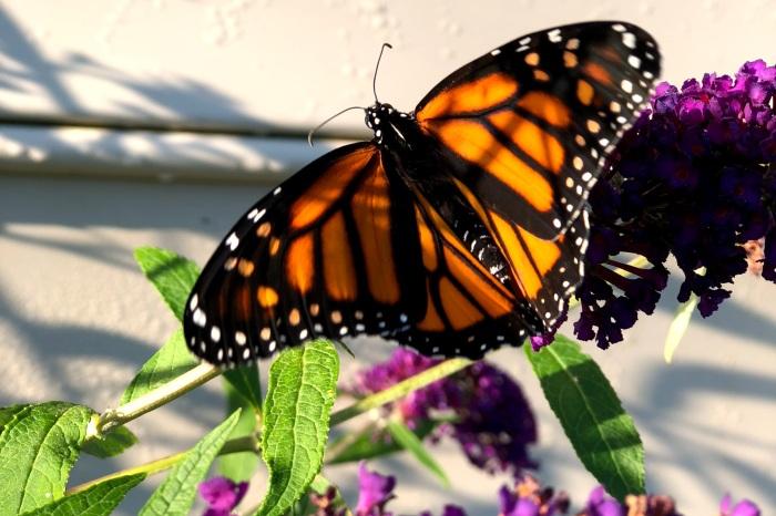 Healing Journey. Transformation Coaching